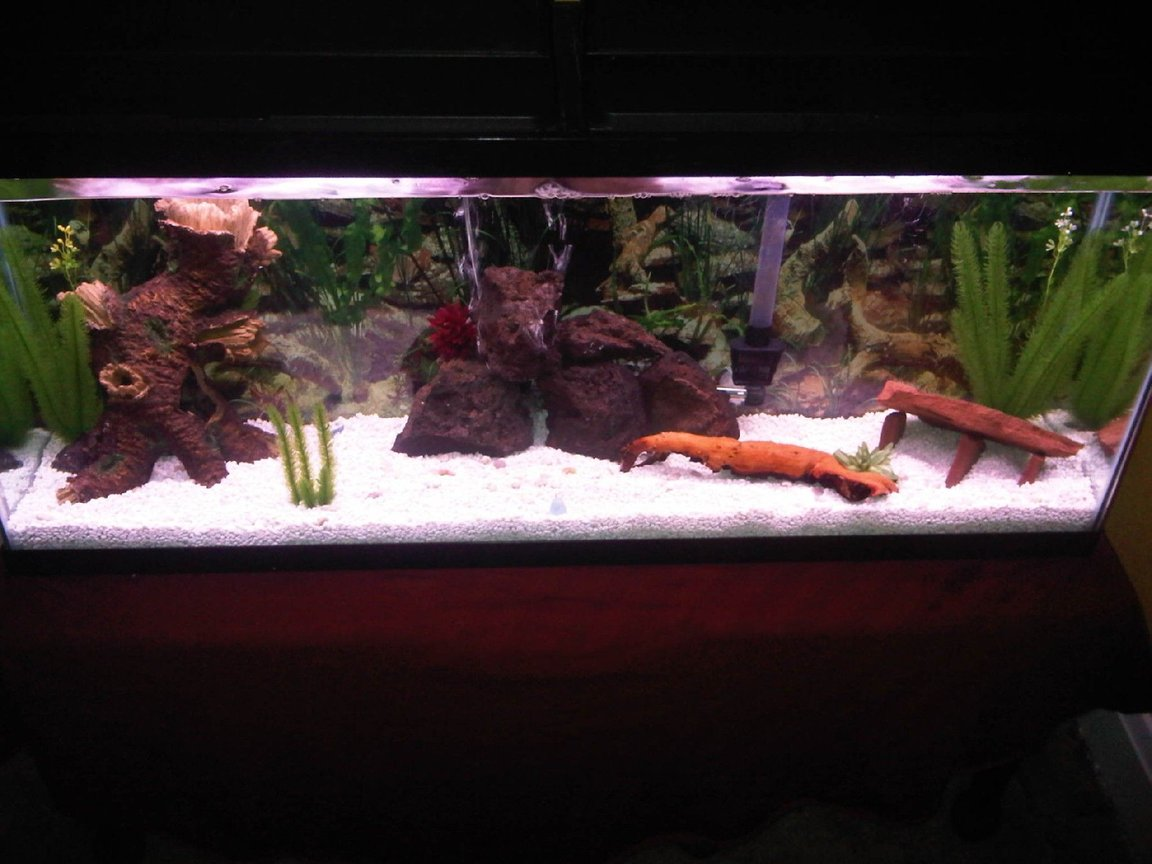 fish tank picture - This is, for the most part, my final product. I will probably end up putting in a few more hiding spots and install the new LED bubble wand but other than that, I think she looks good.