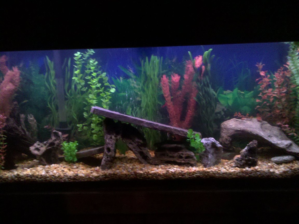 fish tank picture - 55g new set up