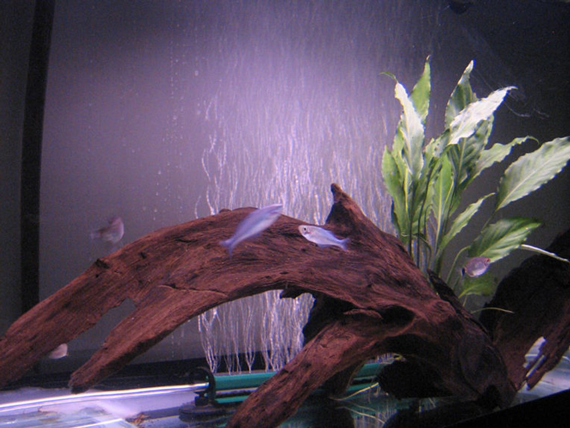 fish tank picture - 4
