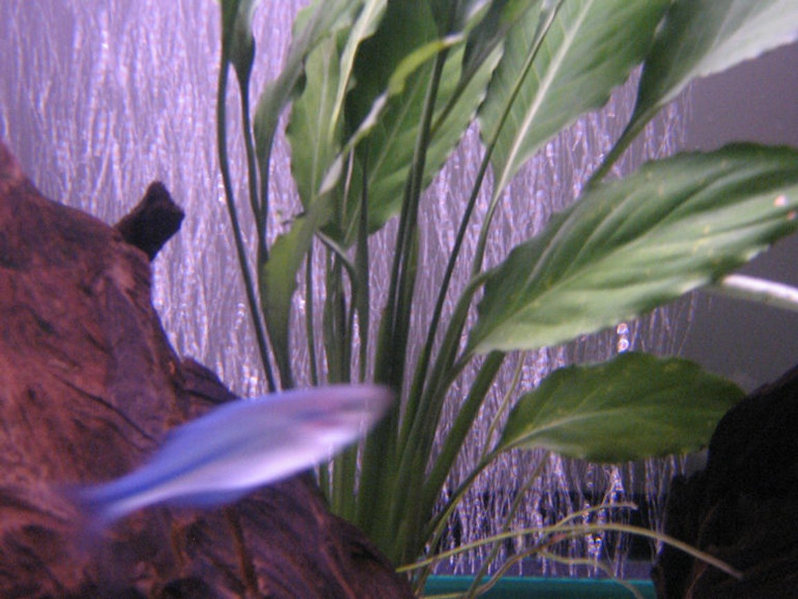 fish tank picture - 6