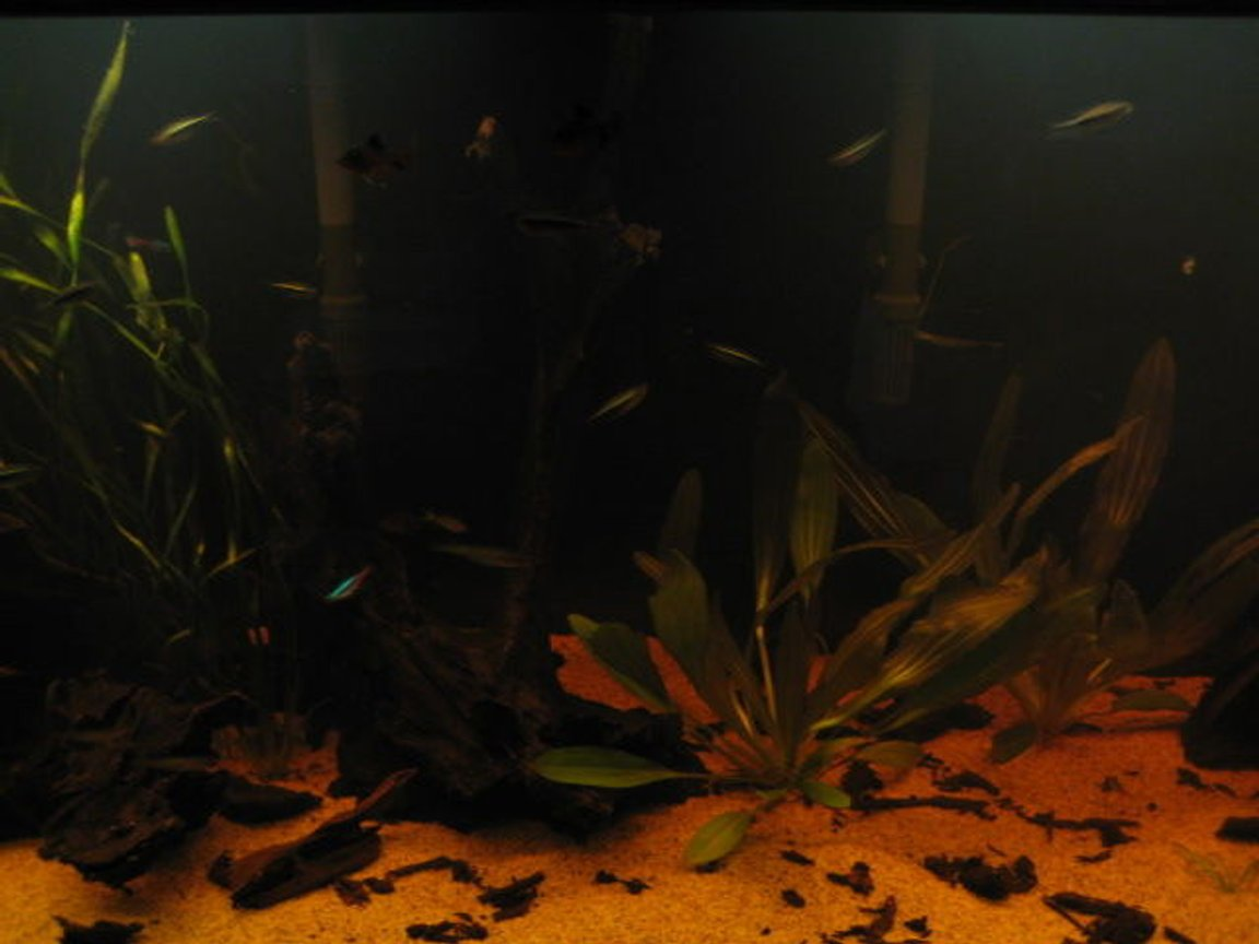 fish tank picture - mas