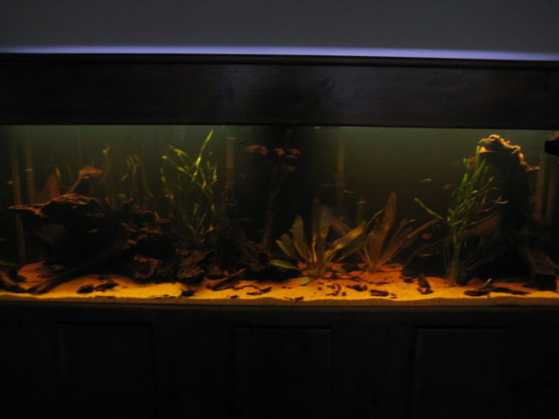 fish tank picture - again