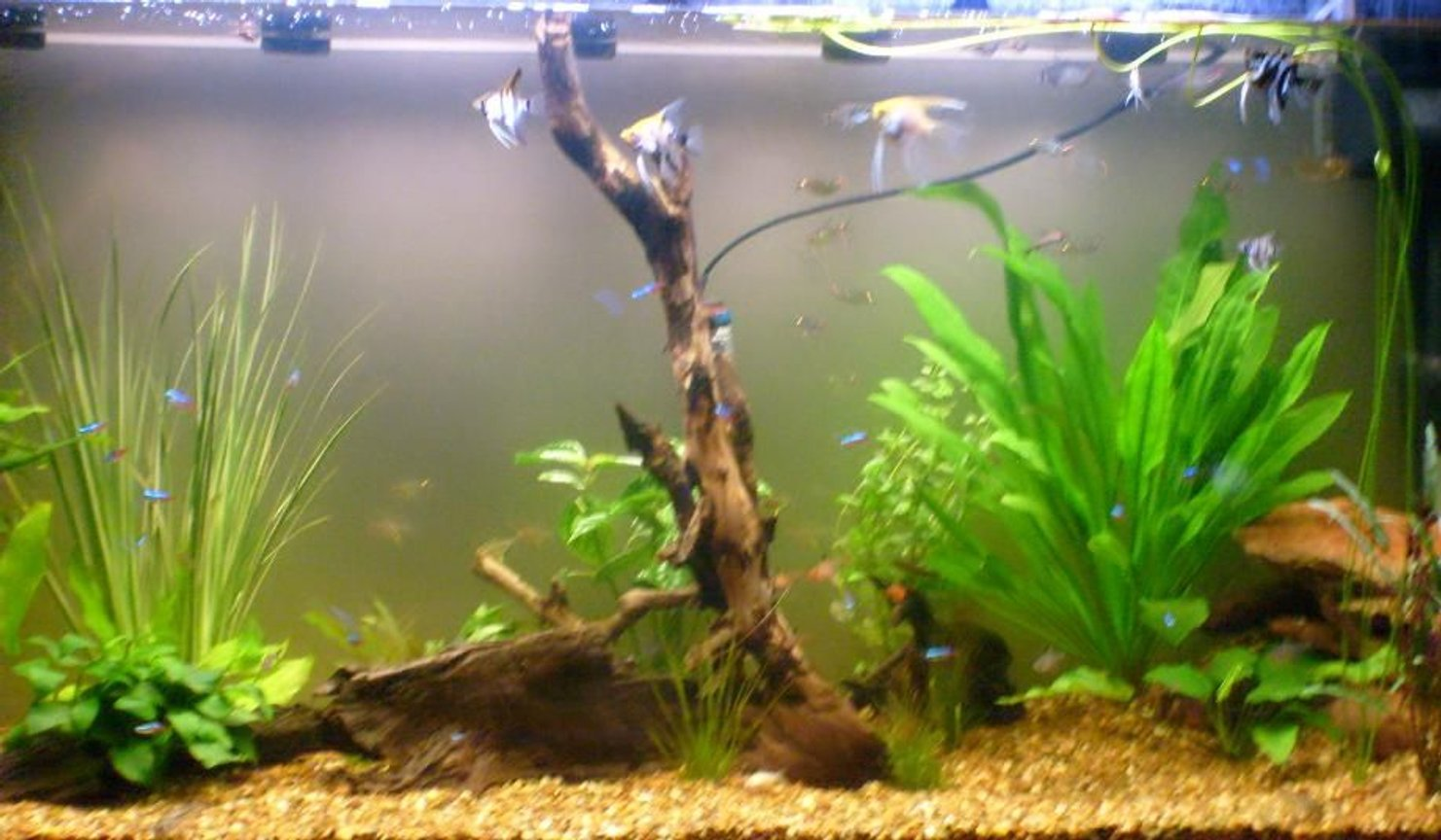fish tank picture - Closer front view.