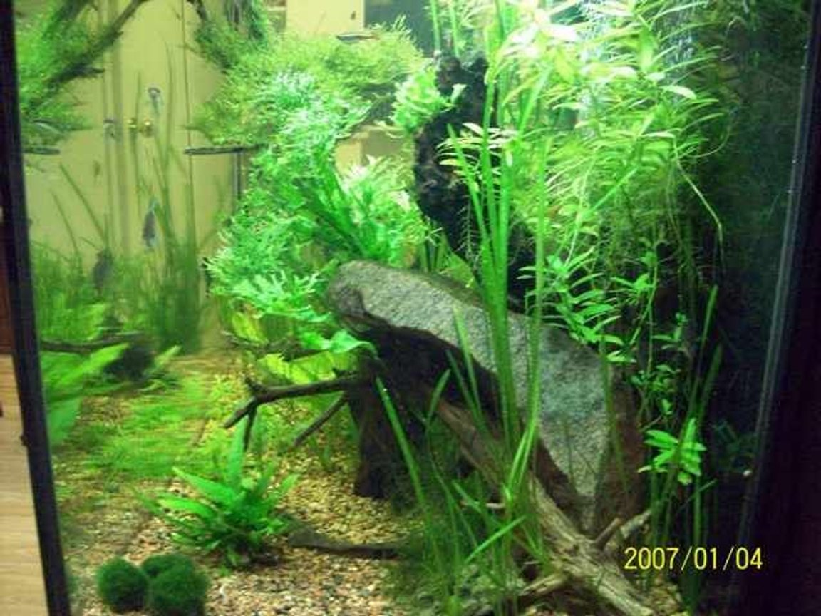 fish tank picture - and more