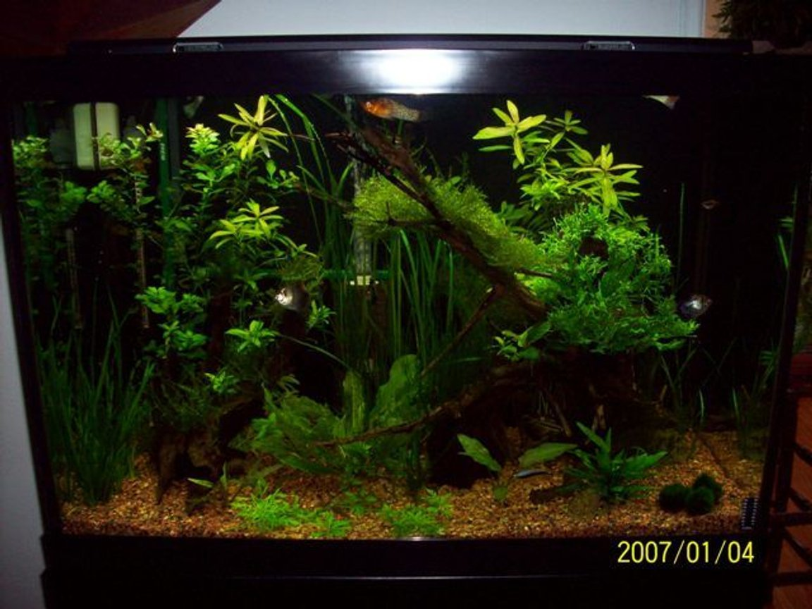 fish tank picture - last one
