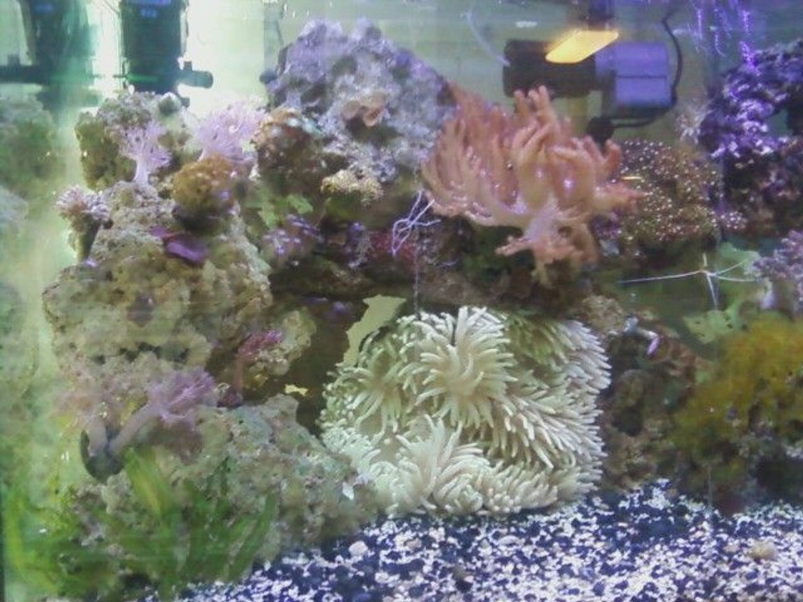 fish tank picture - left of tank