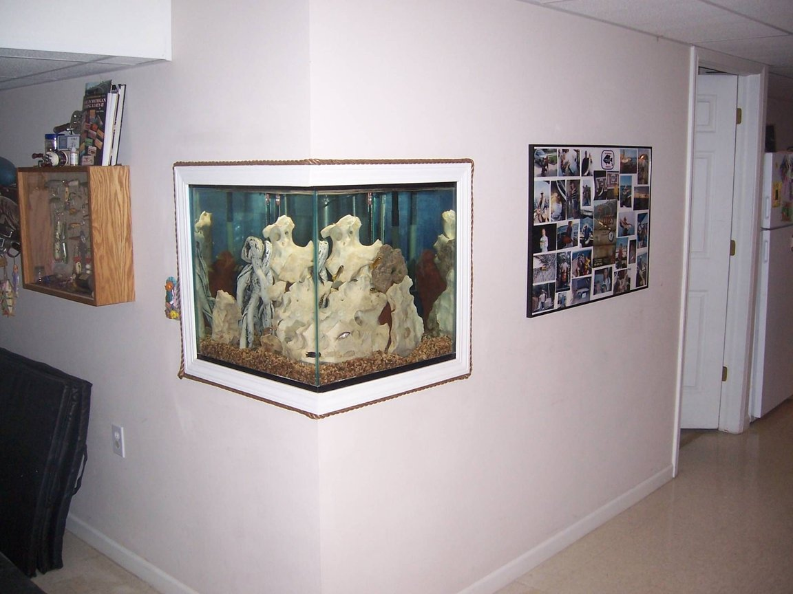fish tank picture - 60 gallon custom cube - can be seen from every angle in the finished basement. Side A.