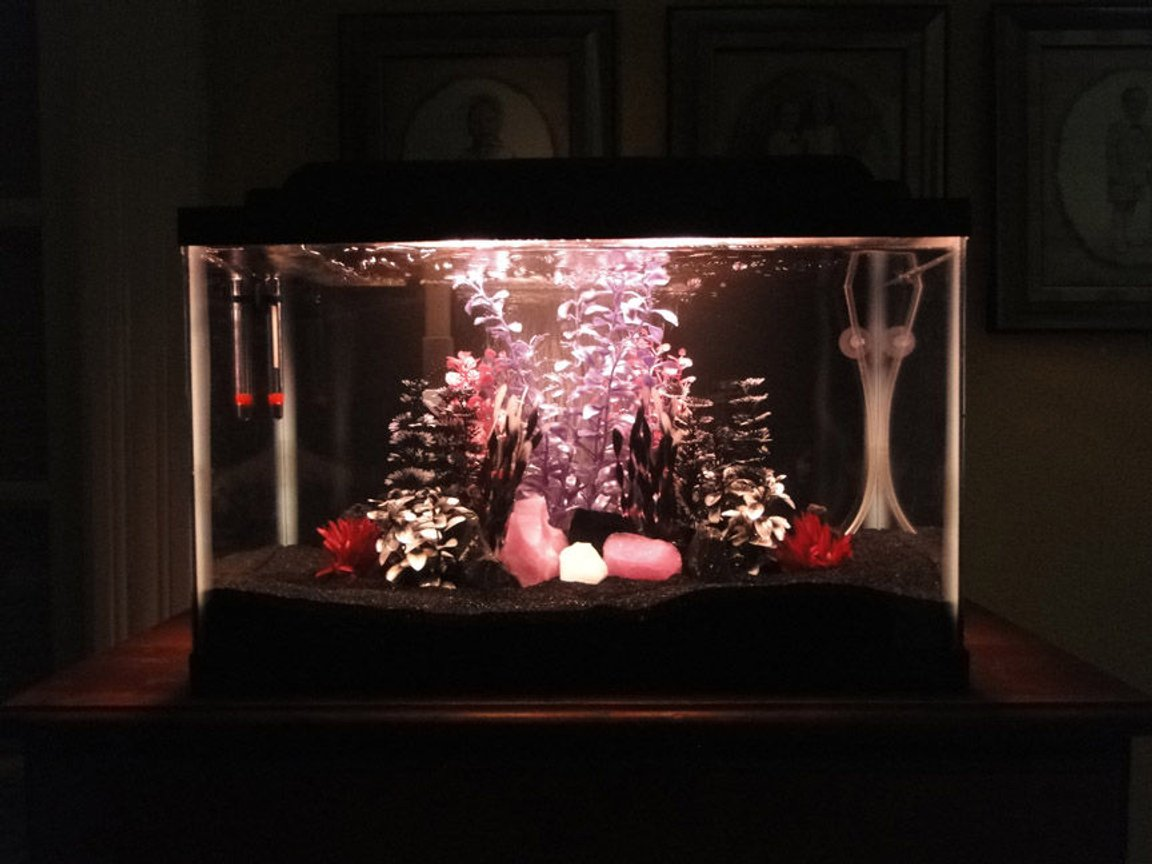 fish tank picture - My 10 gallon 'Goth Bar' tank - I know it's kind of different looking, but I hope people enjoy it anyway.