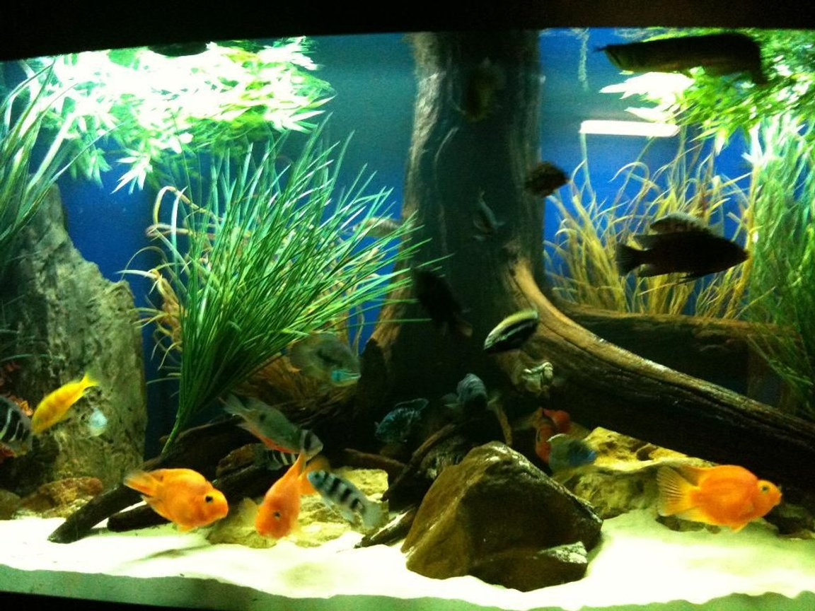 fish tank picture - close up of the new 175 gallon bowfront