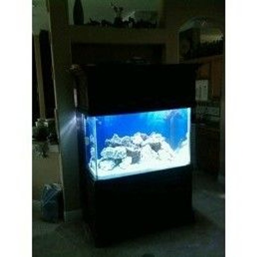 fish tank picture - live rock cycling