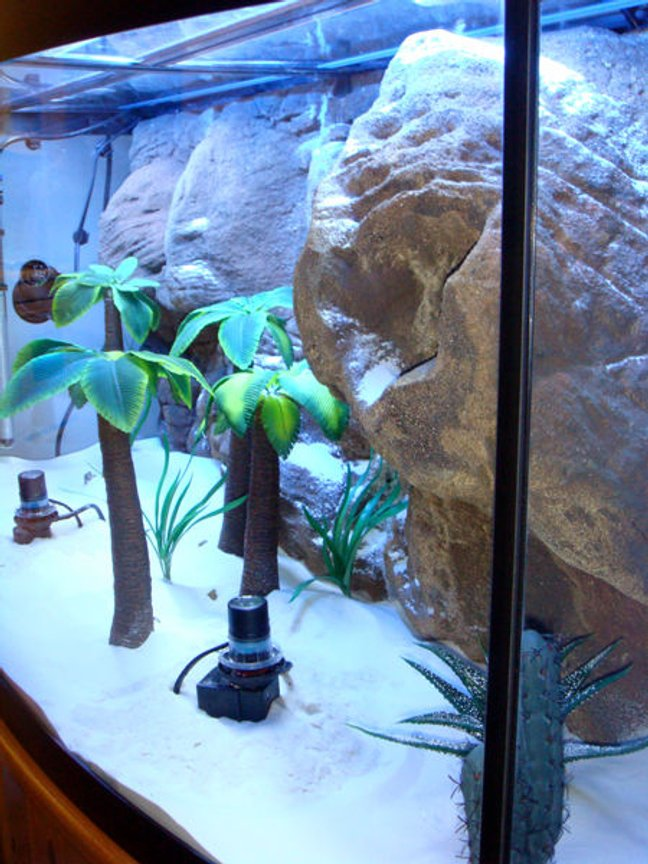 fish tank picture - Side view of the still dry aquarium. The old custom-made palm trees were replaced with the original ceramic versions by Top Fin after the decision was made to get Mbuna Cichlids (due to their habit of shredding leaves/plants)