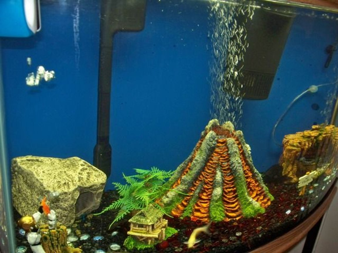 fish tank picture - left sided view