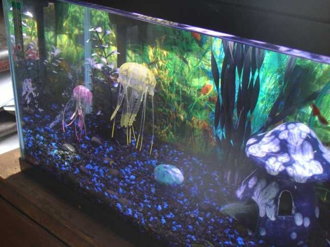 fish tank picture - Daylight hours