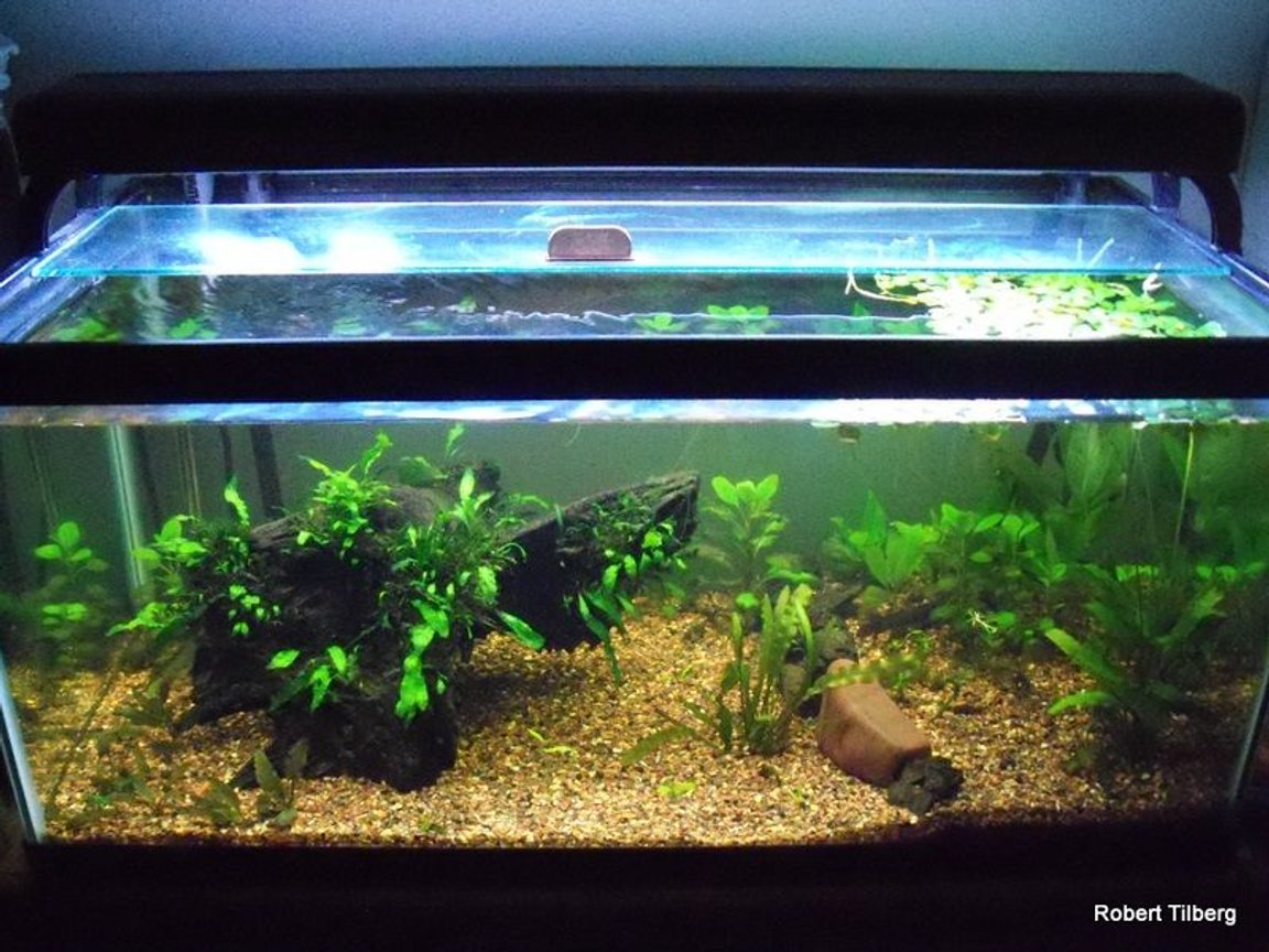 fish tank picture - the one shot from the top