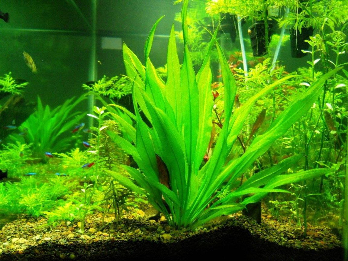 fish tank picture - Side View