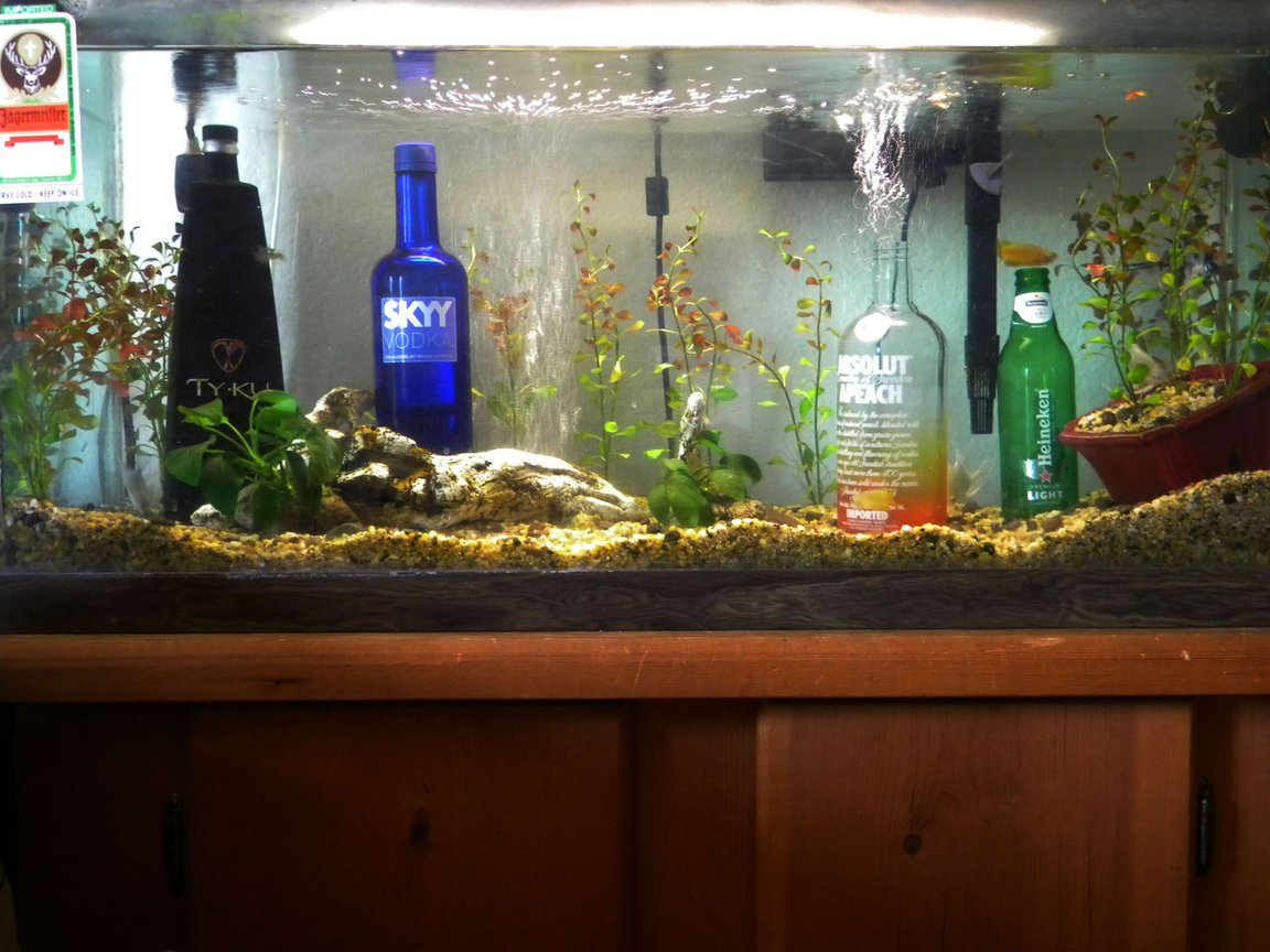 fish tank picture - party tank decor