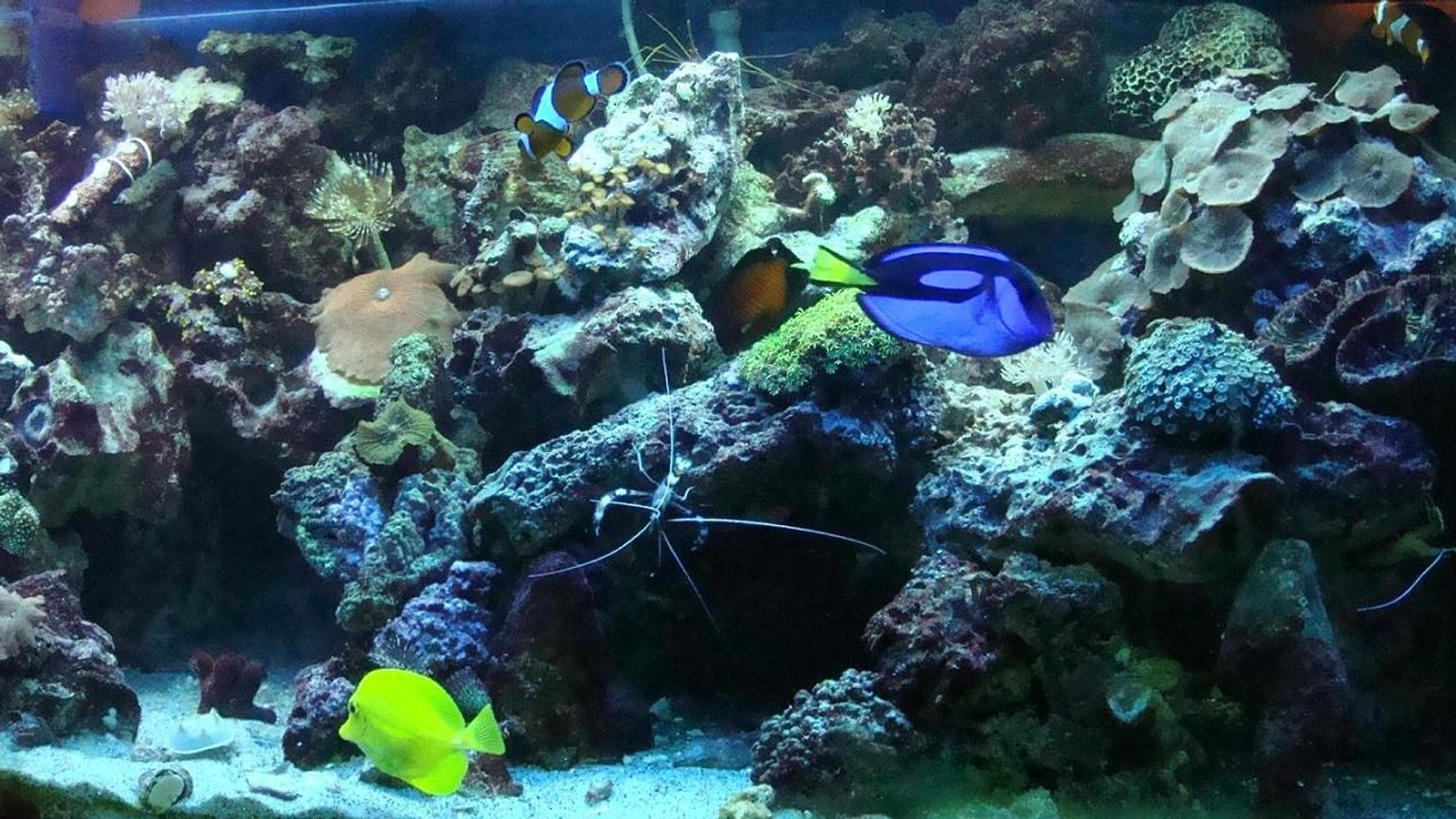 fish tank picture - reef creatures