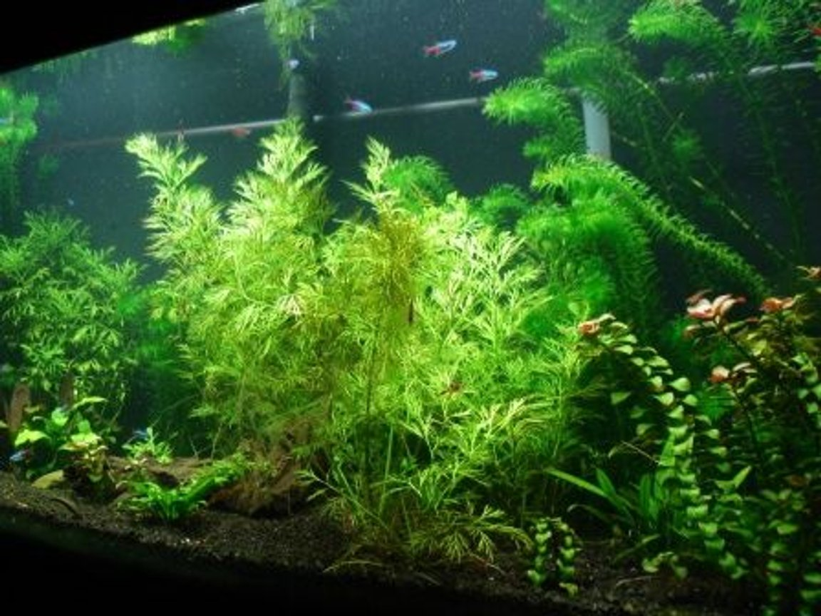 fish tank picture - 1