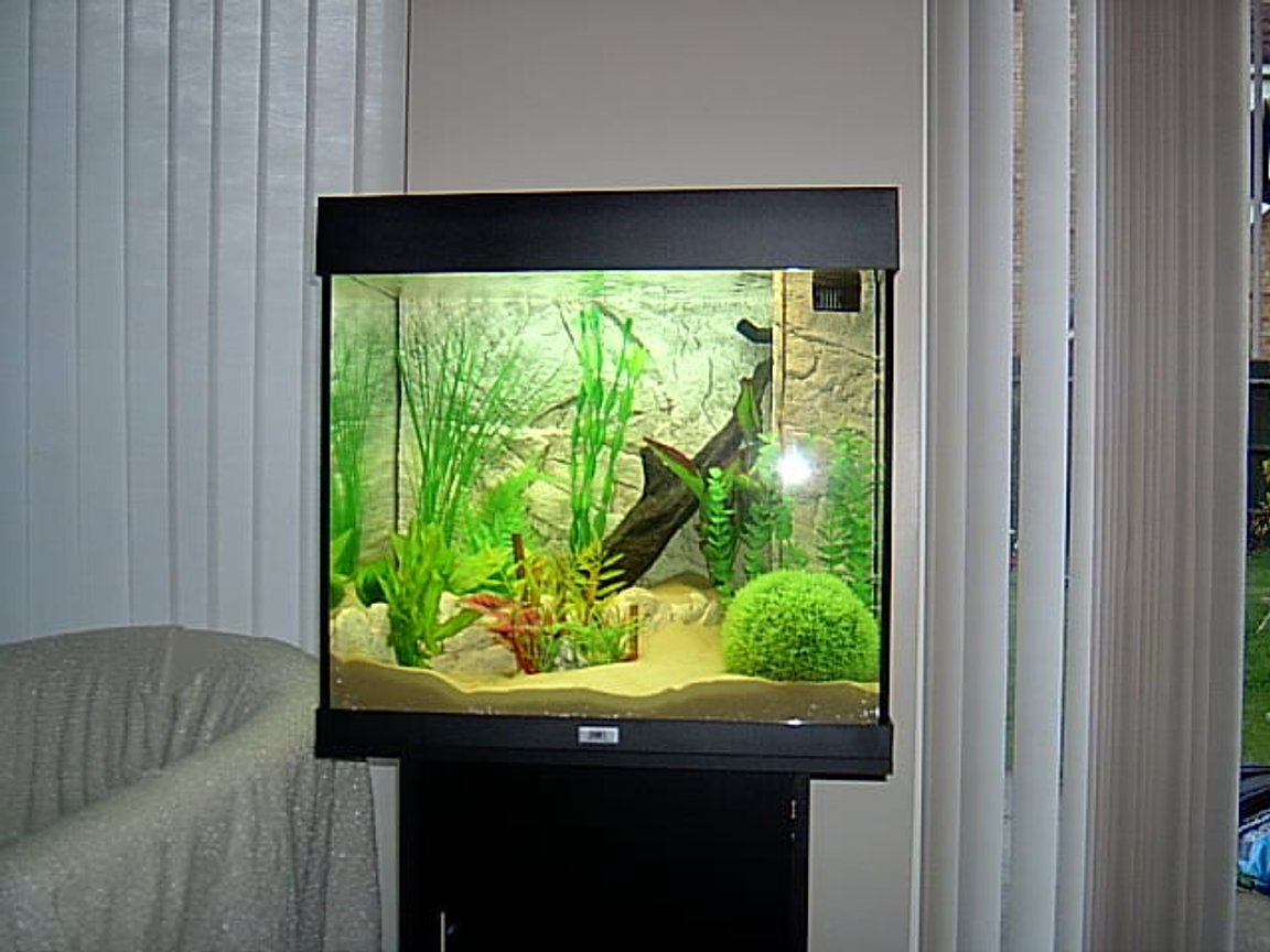 fish tank picture - new gold fish tnak