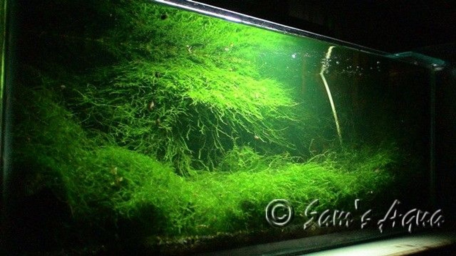 fish tank picture - My moss tank