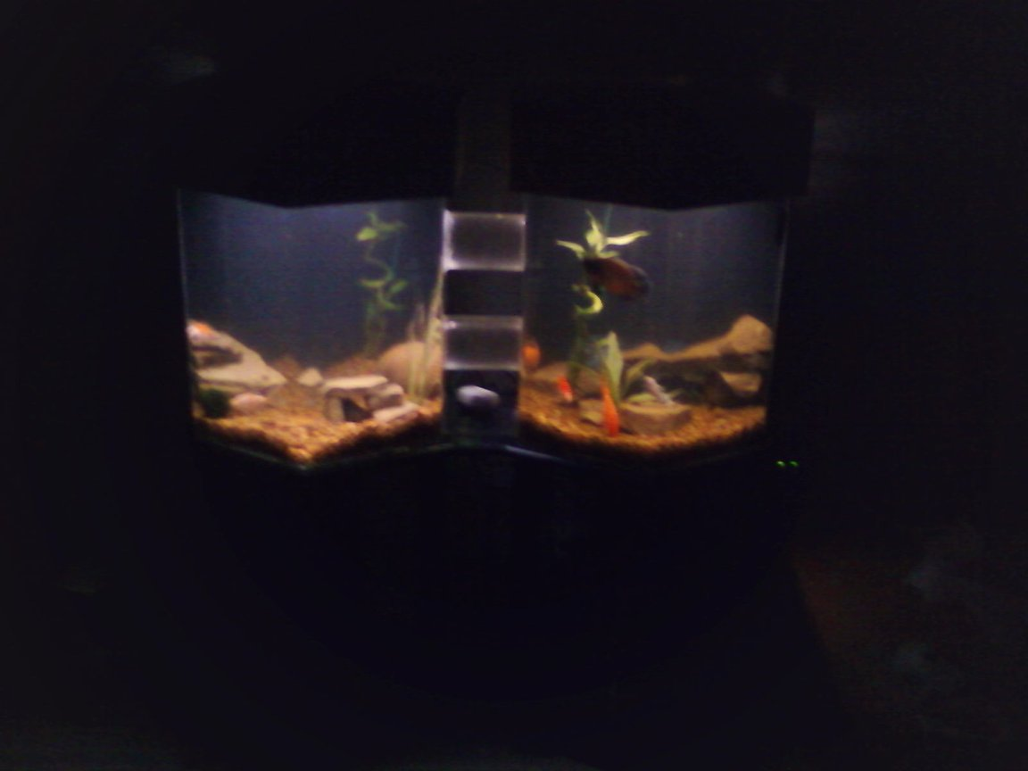 fish tank picture - after dark