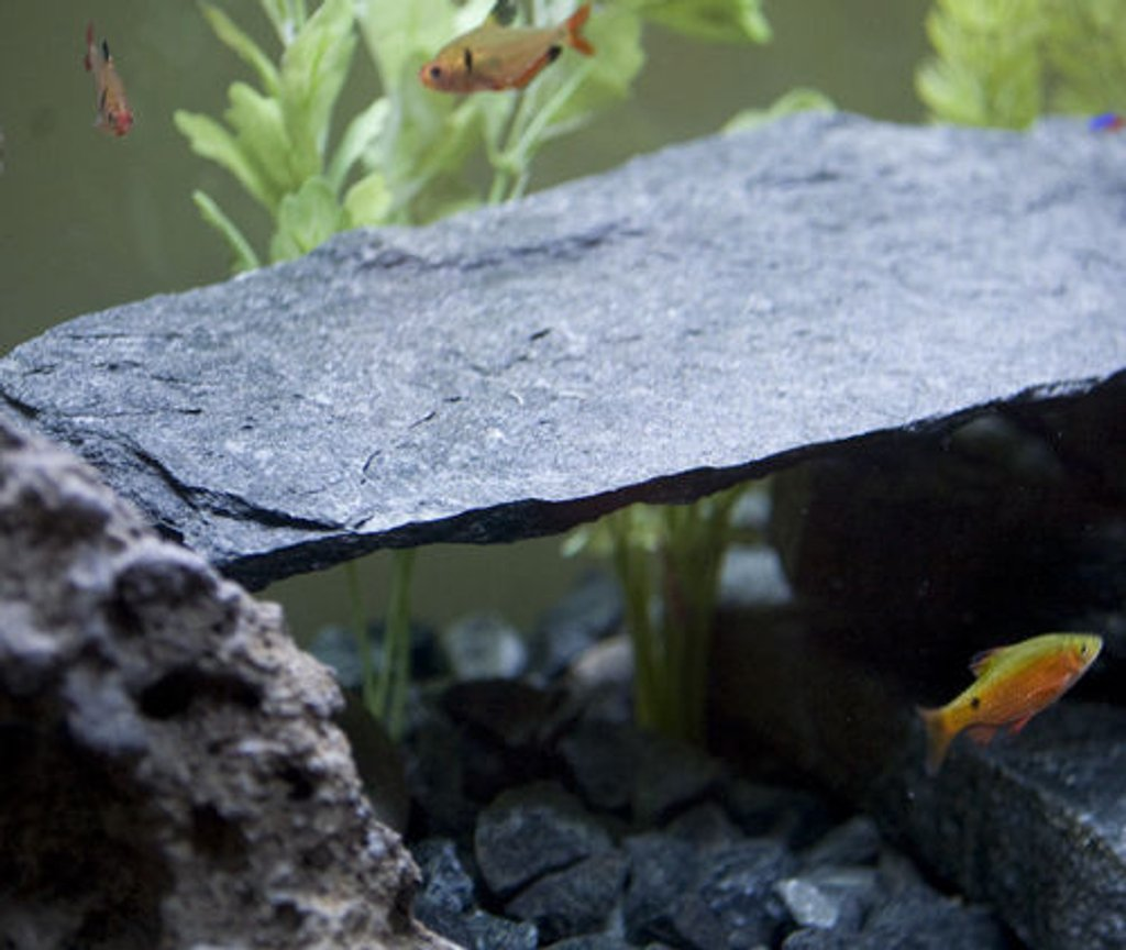 fish tank picture - ***One of my little guys new hiding spots