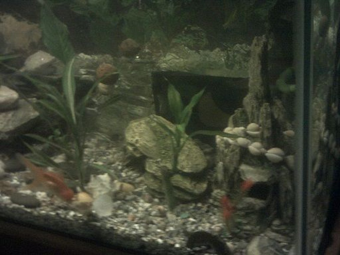 fish tank picture - right side of the fish tank