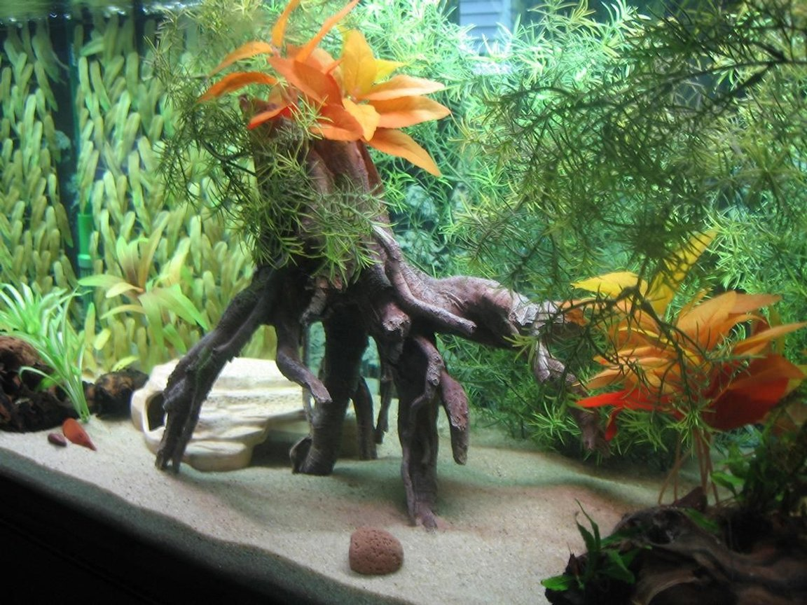 fish tank picture - 75g Brackish Tank Set-up (side)