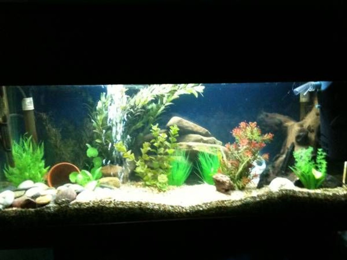 fish tank picture - 3 foot tank before i got all my new fish :D