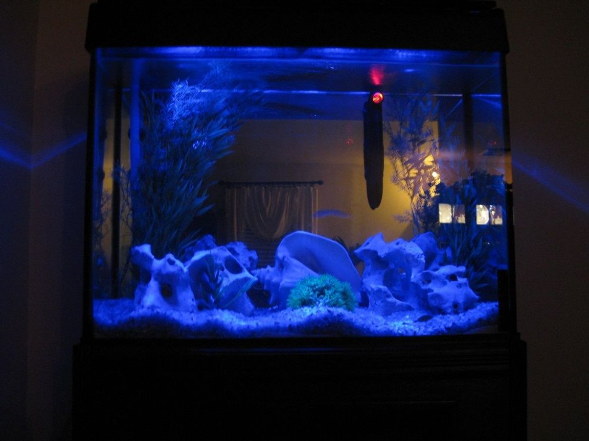 fish tank picture - Moonlight special