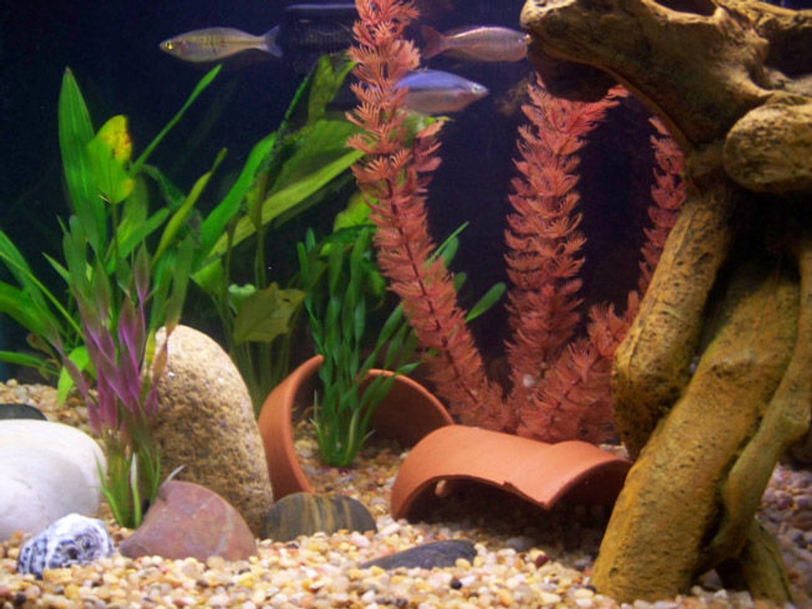 fish tank picture - 55g Riverbed: Close-Up 2
