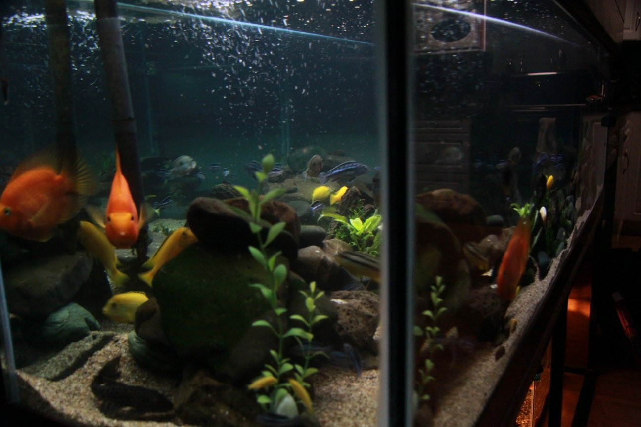fish tank picture - Corner shot