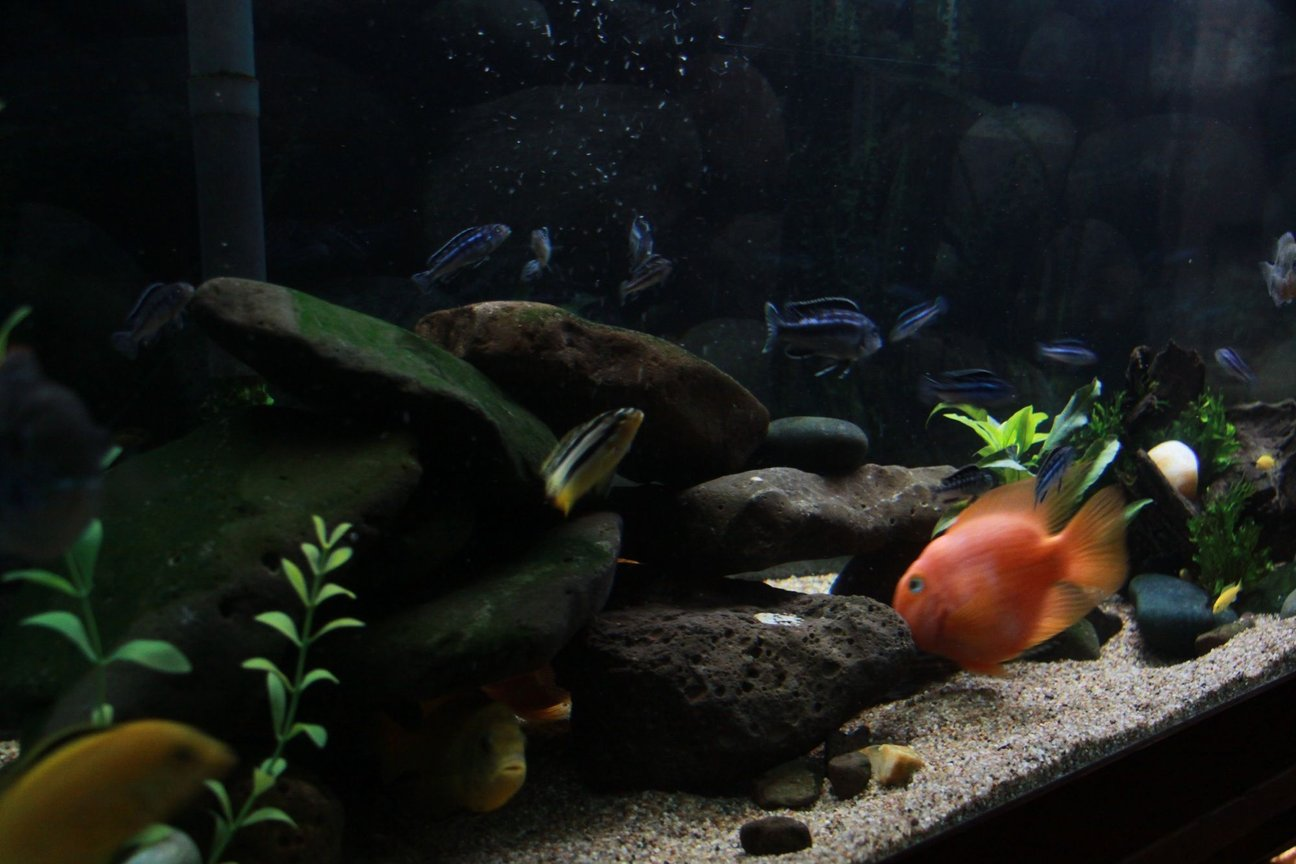 fish tank picture - Left side closeup