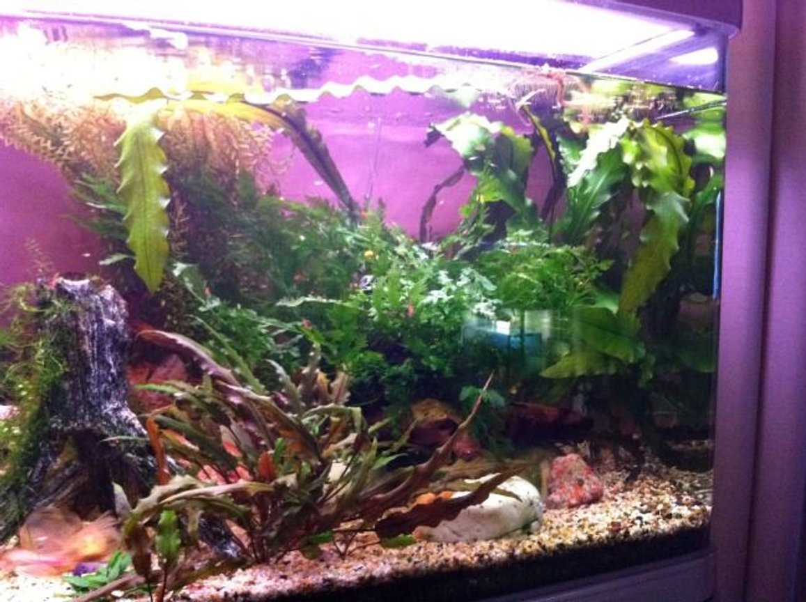 fish tank picture - Right hand side of aquarium