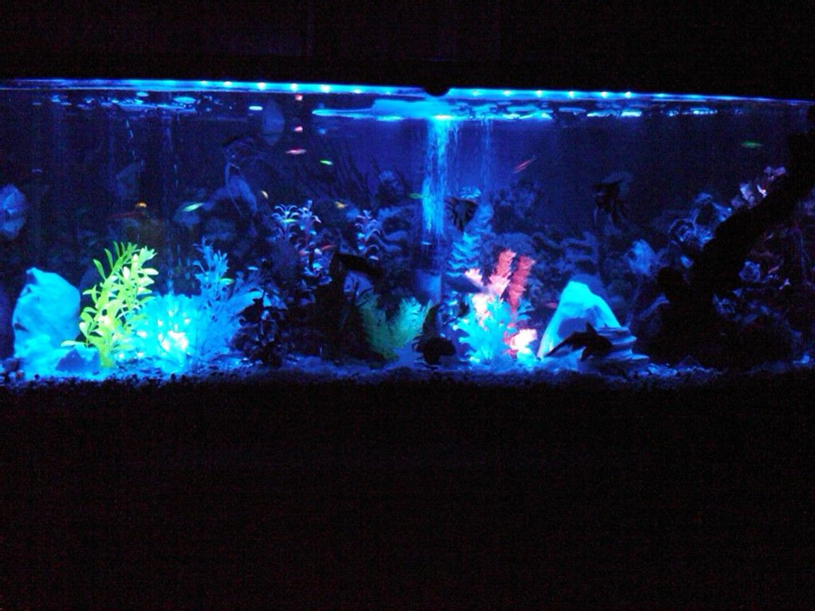 fish tank picture - 55 gafreshwater 55 gallon thats AWESOME!!!! Description: 55 gallon freshwater fish tank!!we love it...check it out and vote!!!!:-) Advice: be patience!!its very helpful believe it or not!! Fish: glow fish,guppies,peacock eels,upside down catfish,sucker fish,gohst shrimp,afircan dworf frogs,mollys,lil of everything Corals/Plants: variety of things,drift wood,moss ball,live plants, fake plants,lil of everything!!check it out!! Quote: nothing comes to a sleeper but a dream!! About Yourself: just got into the fish thing...its soothing and keeps me out of trouble,and lets me relax after a hard day at the office!!check it out and vote!!llon black light system!!!