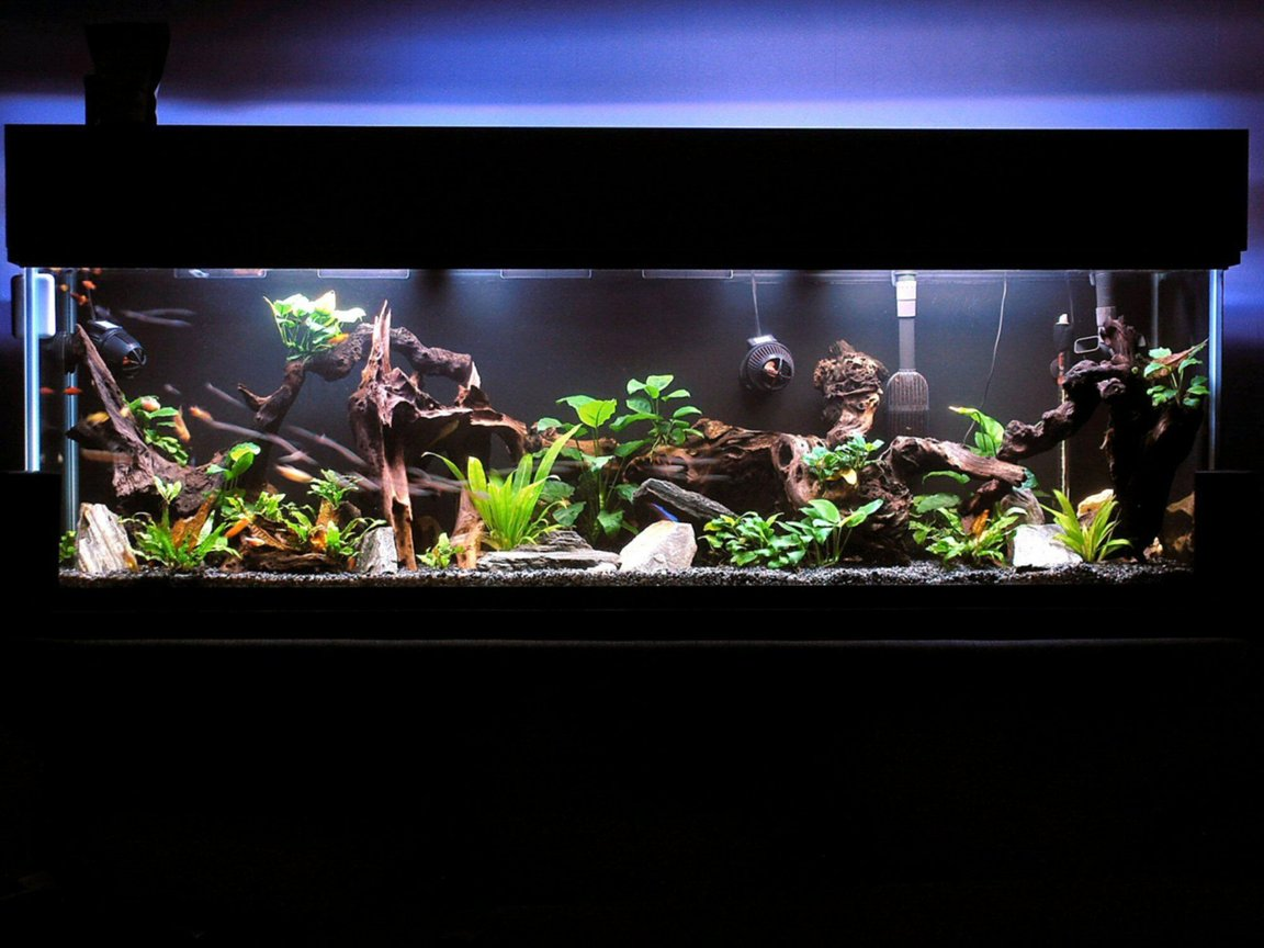 fish tank picture - My sanity.