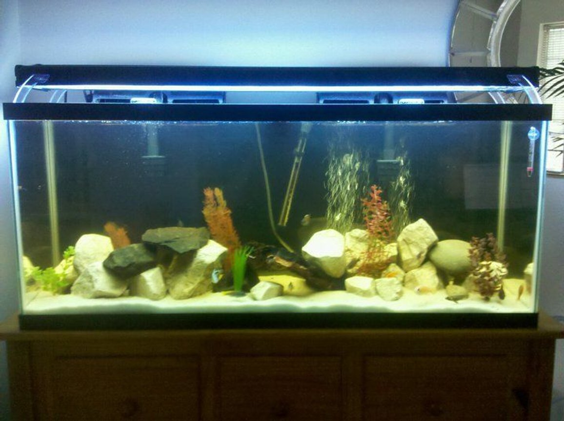 fish tank picture - Updated tank, new light and white sand!