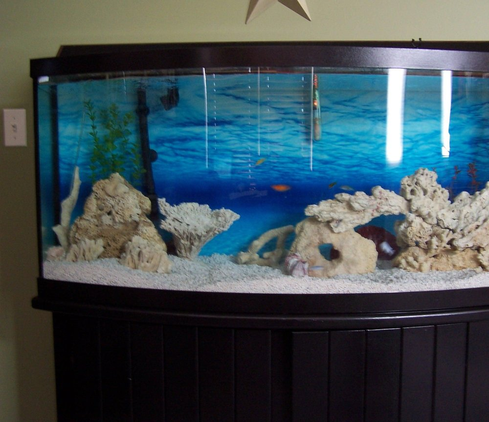 fish tank picture - our tank 4