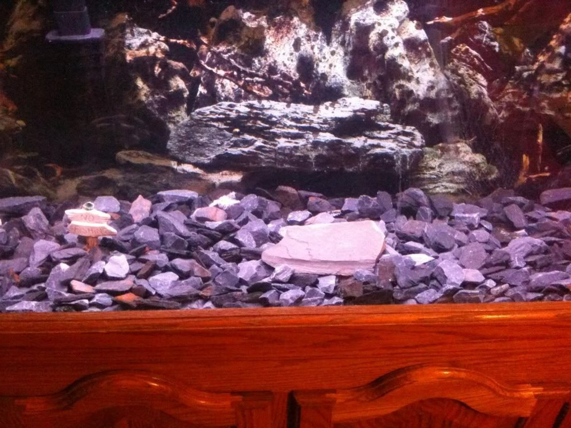 fish tank picture - 55 gallon fish tank, emperor 400, 2 golden oscars, small slate pieces of gravel, sign(no fishing lol) and 75g heater. Used to have sand but changed it to slate cause looks better =)