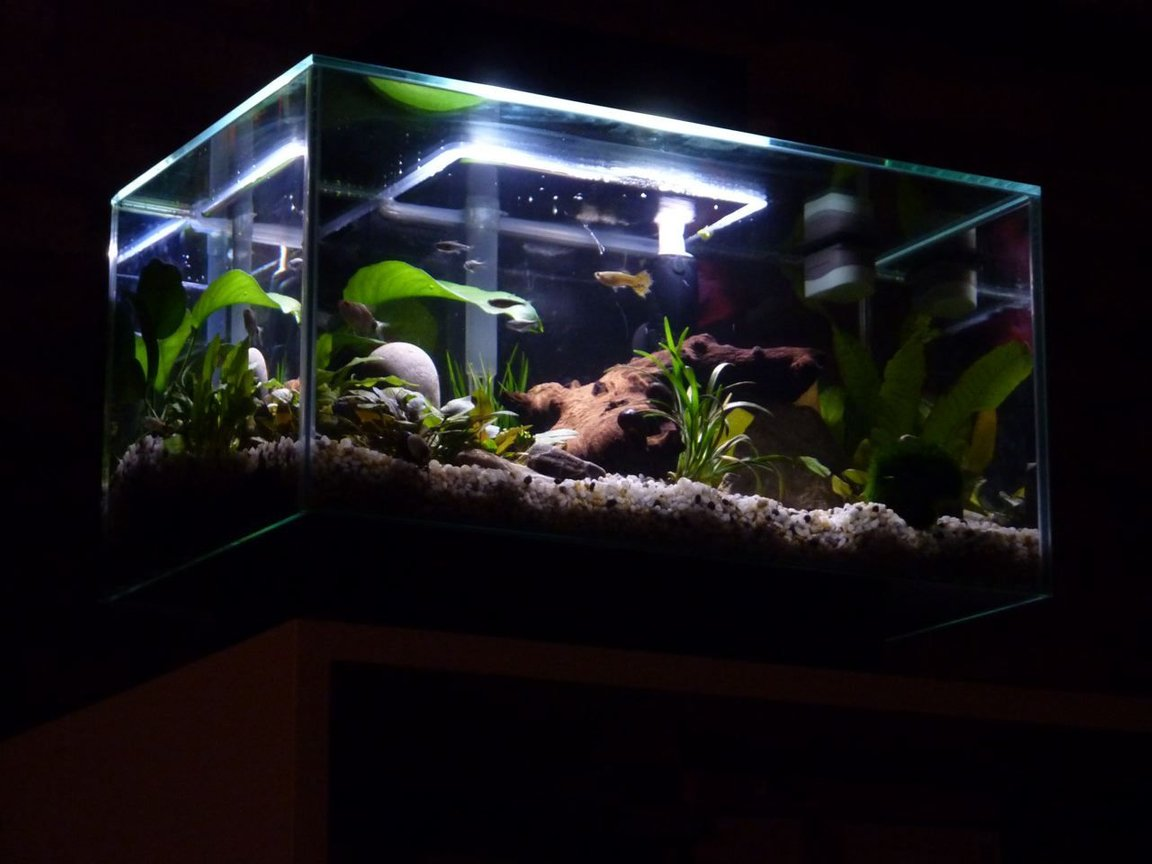 fish tank picture - The Edge.