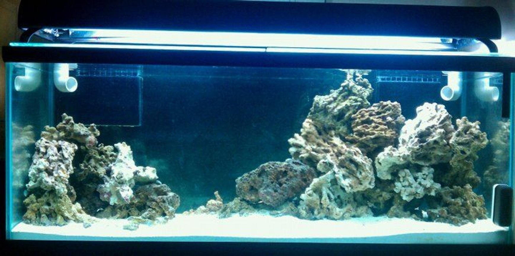 fish tank picture - Work in Progress