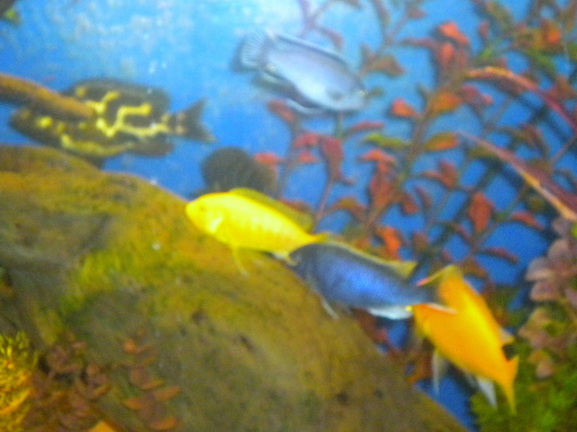 fish tank picture - fishes eating