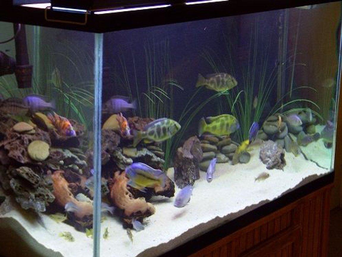 fish tank picture - My aquarium from an angle.