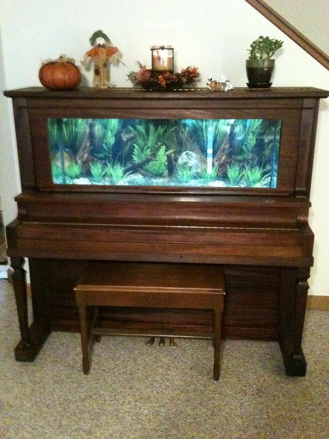 fish tank picture - my piano tank