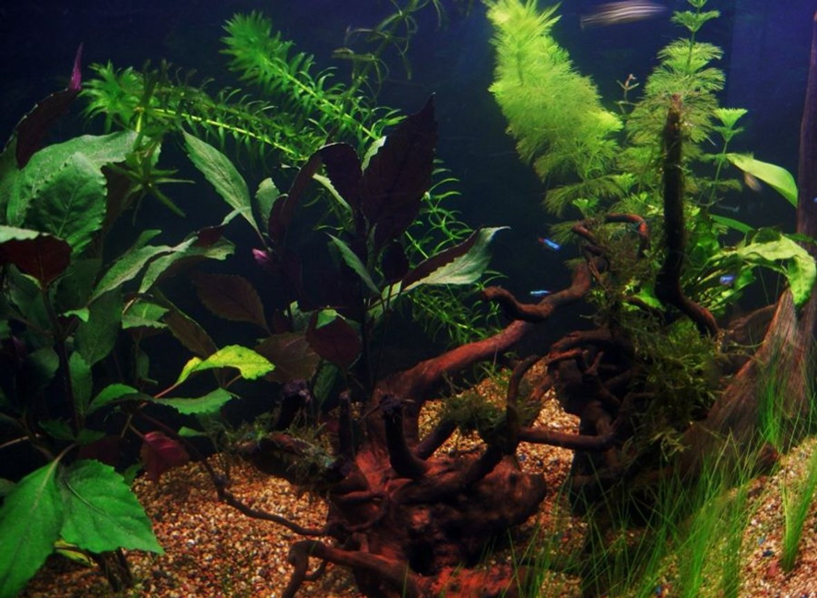 fish tank picture - Additional Photo 2