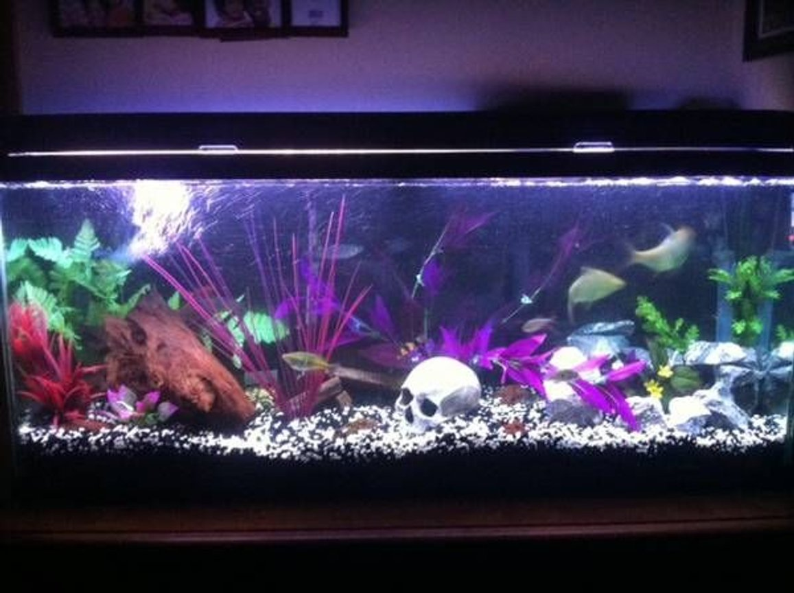 fish tank picture - straight on center view