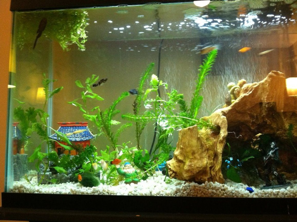 fish tank picture - More plants have been added.