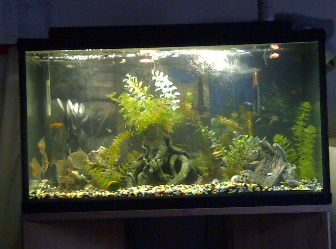 fish tank picture - my other 55 gallon tank