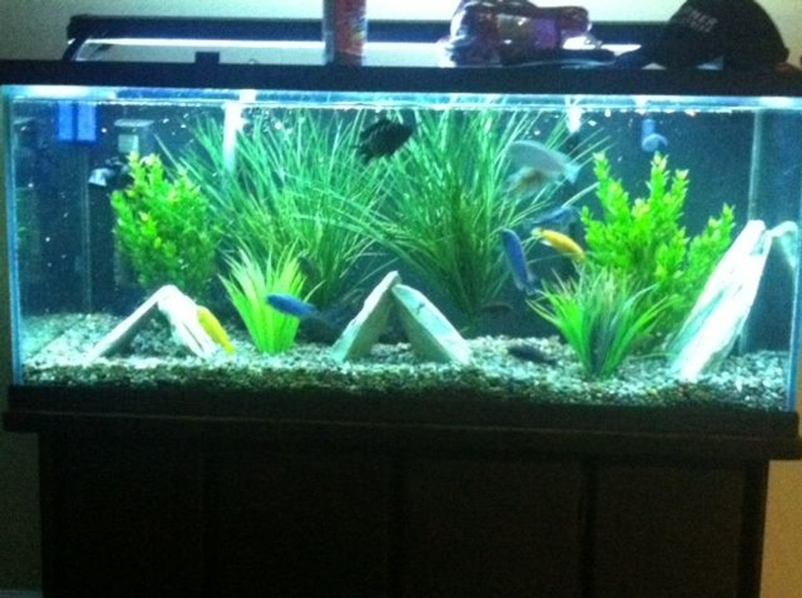 fish tank picture - cichlid tank
