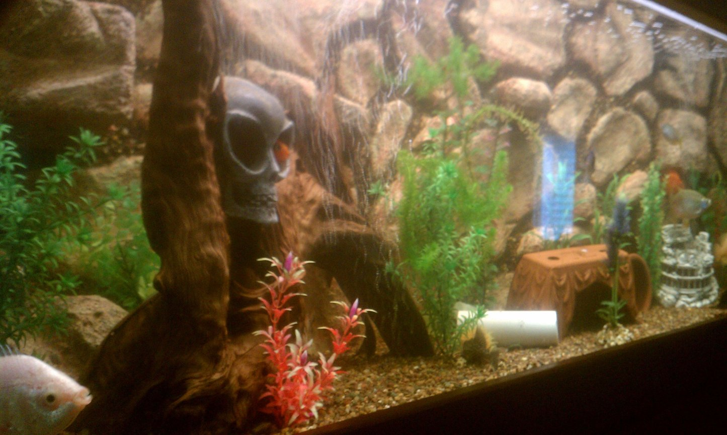 fish tank picture - Other side of my 125 custom